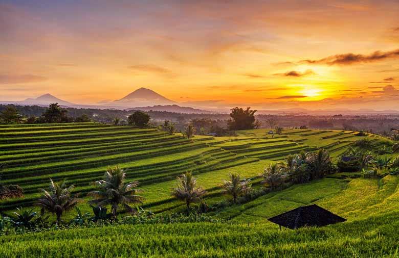 Рисовые поля Жатилувих