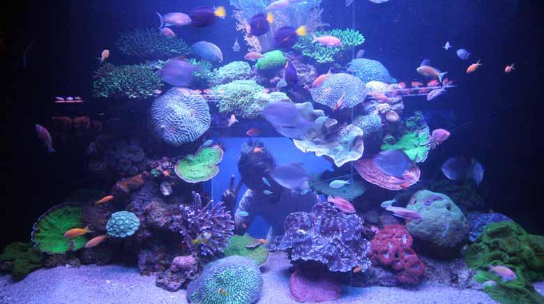 Морской музей в Эйлате