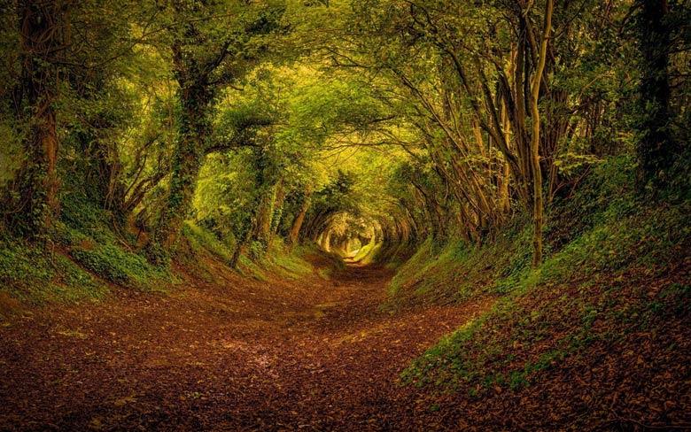 Кричащий лес (Великобритания)