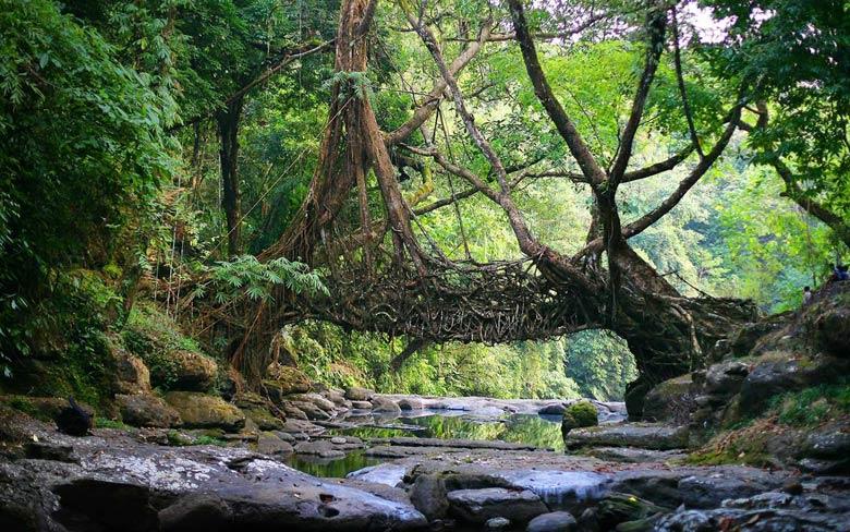 Лес Доу-Хилл (Индия)