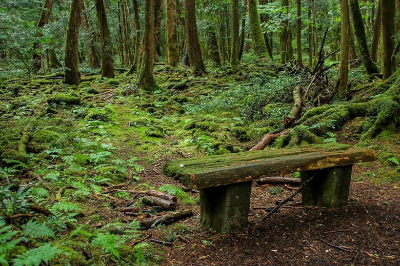 Лес самоубийц (Япония)