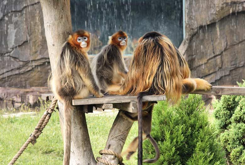 Лесной зоопарк в Даляне