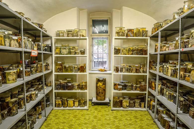 Заспиртованные экспонаты - Патологоанатомический музей в Вене