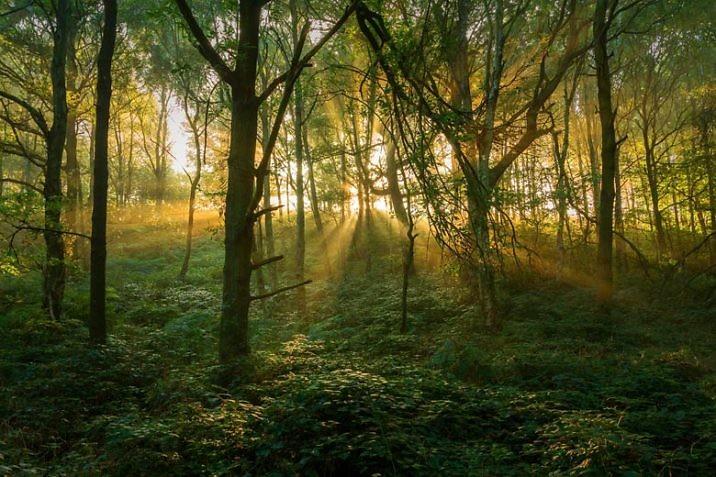 Самые жуткие леса мира