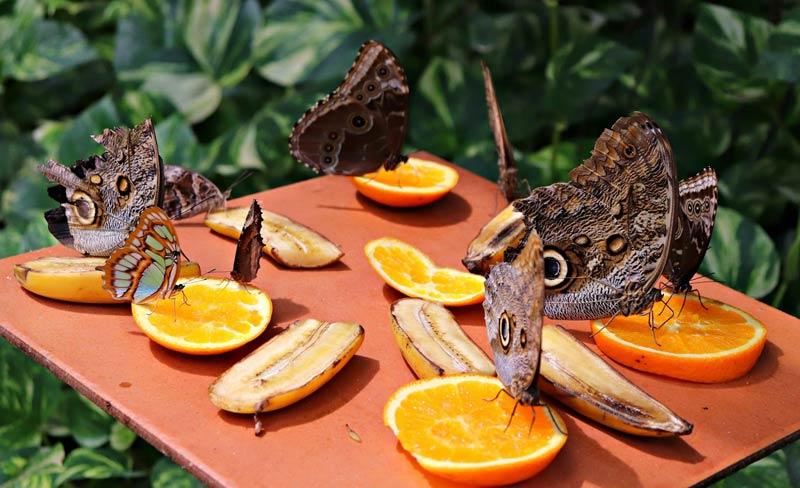 Ферма бабочек на Арубе