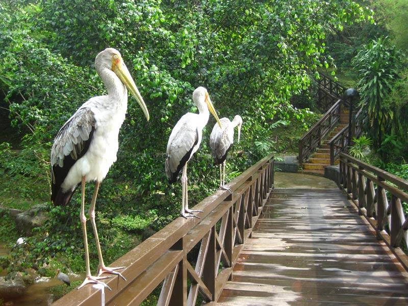 Парк птиц в Куала-Лумпуре - мост