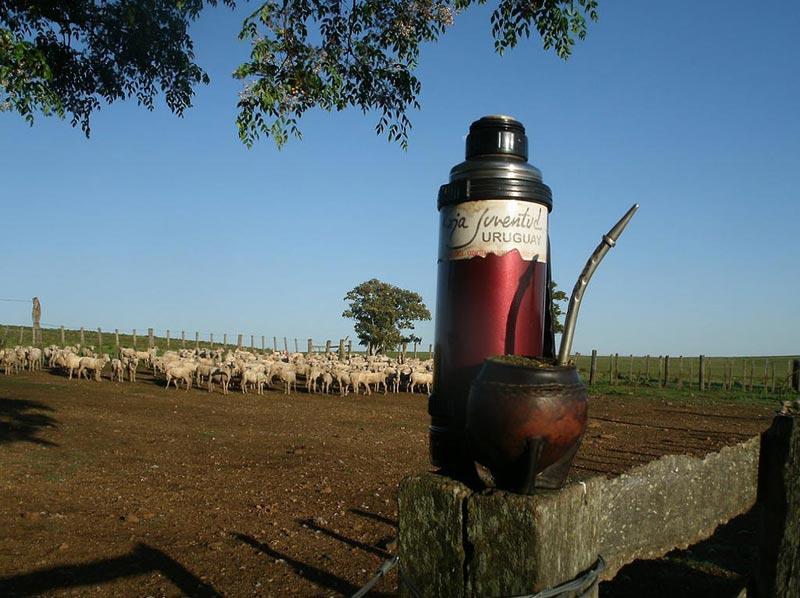 Выпить мате в Уругвае
