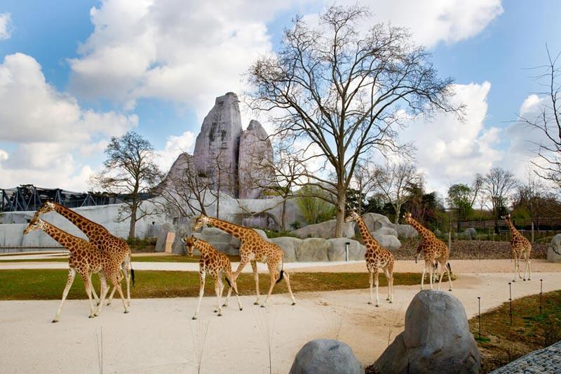 Венсенский зоопарк в Париже