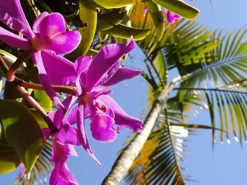 Остров Орхидей в Фиджи