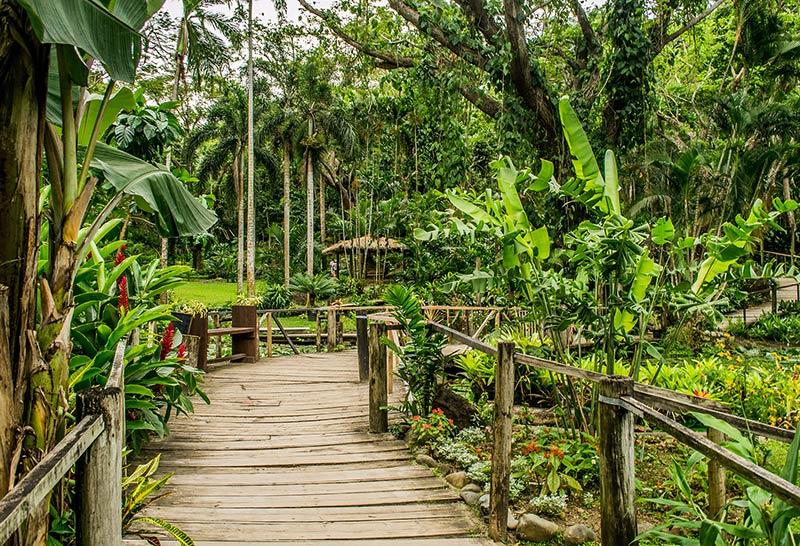 Сад Спящий гигант в Фиджи