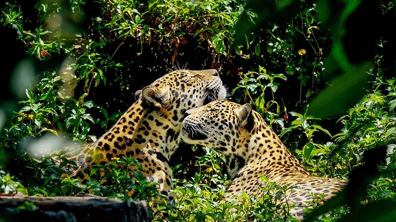 Заповедник ягуаров в Белизе